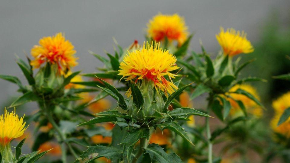 Через Алтайский край пытались перевезти зараженные цветы