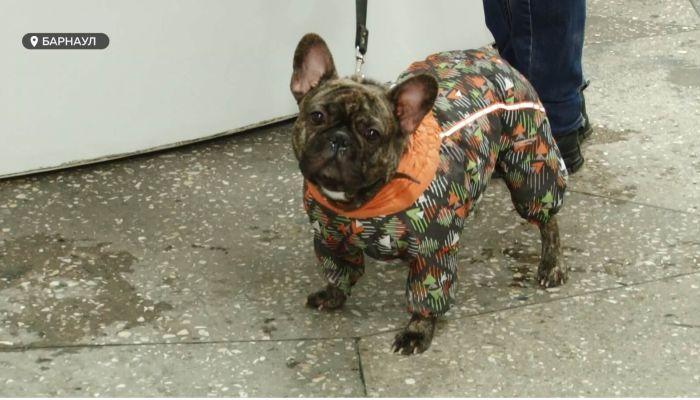 Специальный репортаж: как алтайские ветеринары спасают жизнь и здоровье животных