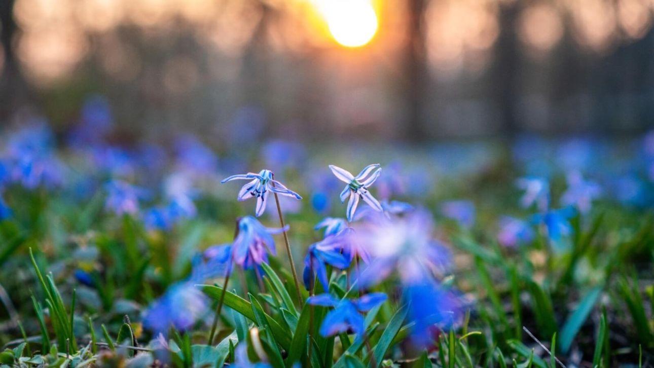 Народные приметы 2 марта. Что означают сны в начале весны