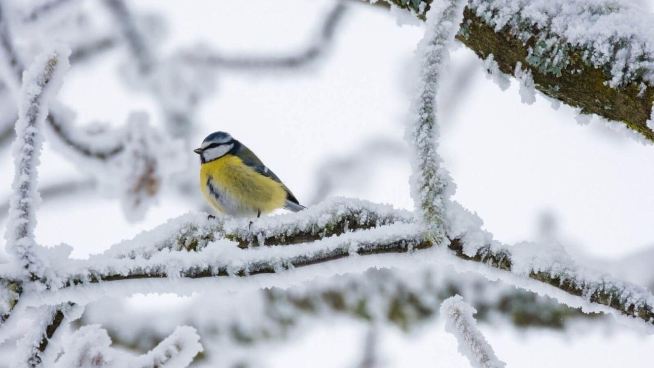 Теплую погоду со снегом прогнозируют синоптики 2 марта на Алтае