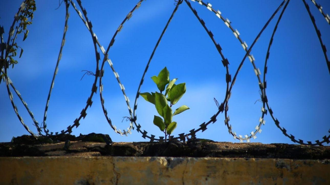 Новое граффити Бэнкси появилось на стене Редингской тюрьмы