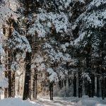 Ветрено и снежно: штормпрогноз в Алтайском крае продлен на 6 марта
