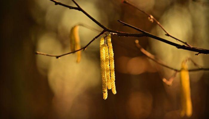 Весна пришла: в Алтайском крае потеплеет до +9 на длинных выходных