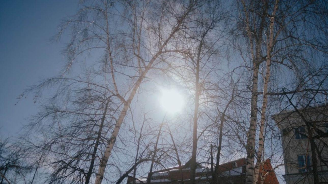 Весеннее тепло придет в Алтайский край на праздник 8 Марта