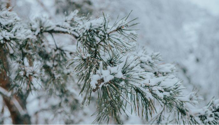 Штормпрогноз из-за ветра и снега передали в Алтайском крае на 12 марта