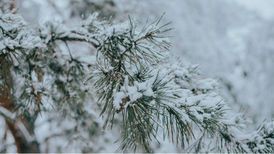 Погода. Зима. Снег