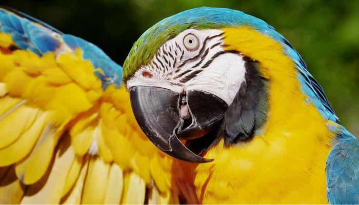 Жителя Рубцовска обманули при покупке попугая за 20 тысяч