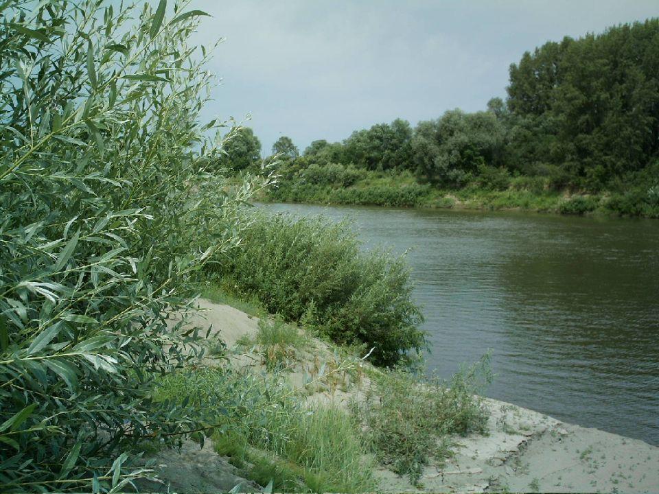 Река Чумыш в окрестностях Кытманово