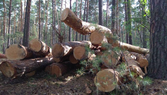 Минприроды понуждает Алтайкровлю прекратить рубки леса в окрестностях Барнаула