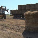 Посевная-2021: алтайские аграрии обсудили новые подходы и технологии