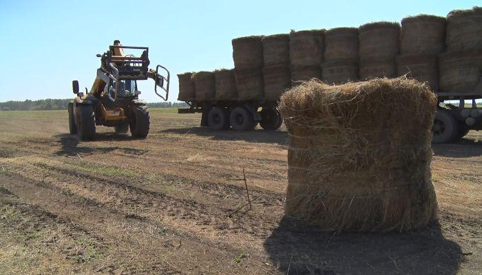 Я все вернул: в Алтайском крае судят сельчанина за два гнилых тюка сена