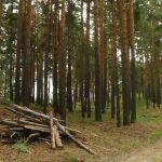 Алтайские экологи призывают усмирить бесконтрольные вырубки в заказниках