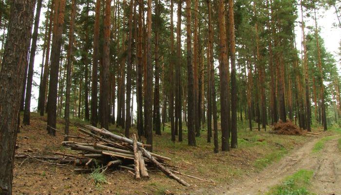 В ленточном бору под Барнаулом оборудуют шесть мест для отдыха