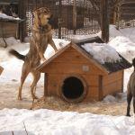 Проблемы отлова: бродячие собаки терроризируют жителей алтайских городов