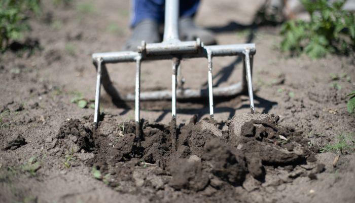 Зелень, репа и горох: какие растения нужно высадить в грунт в апреле