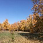 Мизюлинская роща в Барнауле может лишиться более ста деревьев
