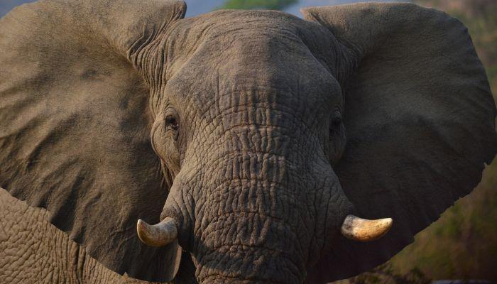 Два слона устроили потасовку на цирковом выступлении в Казани