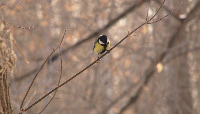Для чего и когда в мире отмечают Международный день птиц