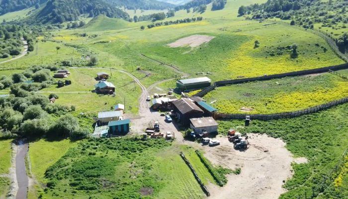 Эко-бизнес на Алтае: зачем нужен интернет для мараловой фермы