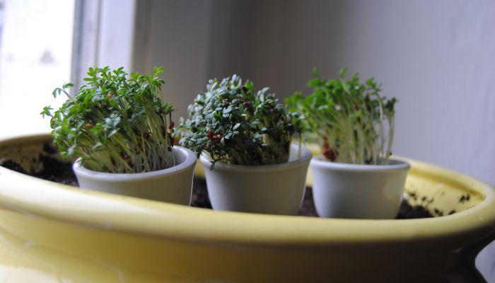 Какие гаджеты помогут вырастить мини-огород у себя дома