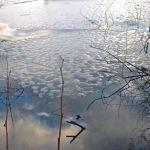 Холодная погода с заморозками и снегом на неделю накроет Алтайский край