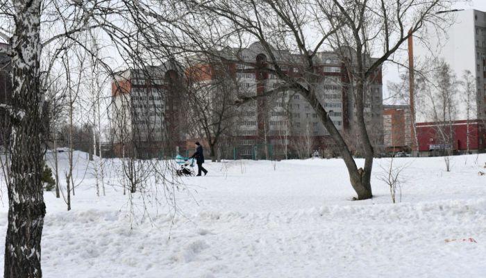 Власти Барнаула пообещали не слишком вырубать Мизюлинскую рощу