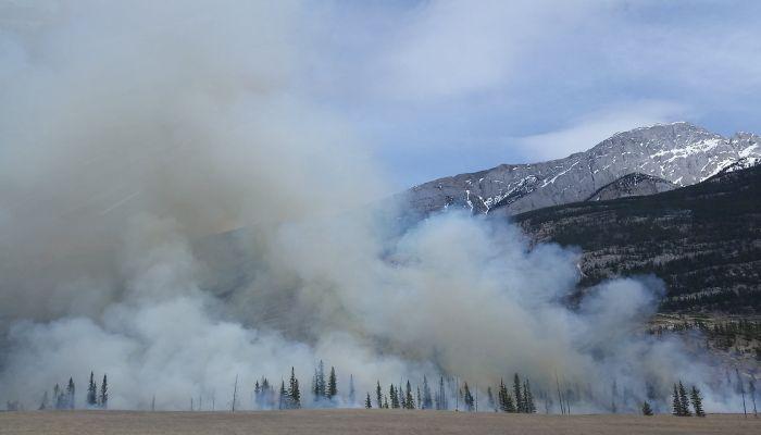 Почти 250 городам и селам Алтая угрожают лесные пожары в этом сезоне