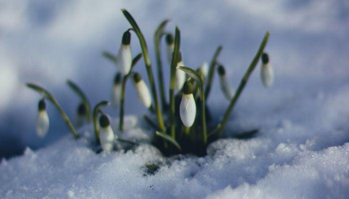Весеннее тепло до +12 градусов придет в Алтайский край к выходным