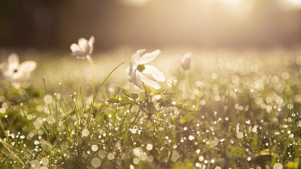 Весна. Трава. Роса