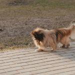Как летом: жара до +17 градусов ожидается в Алтайском крае 5 апреля