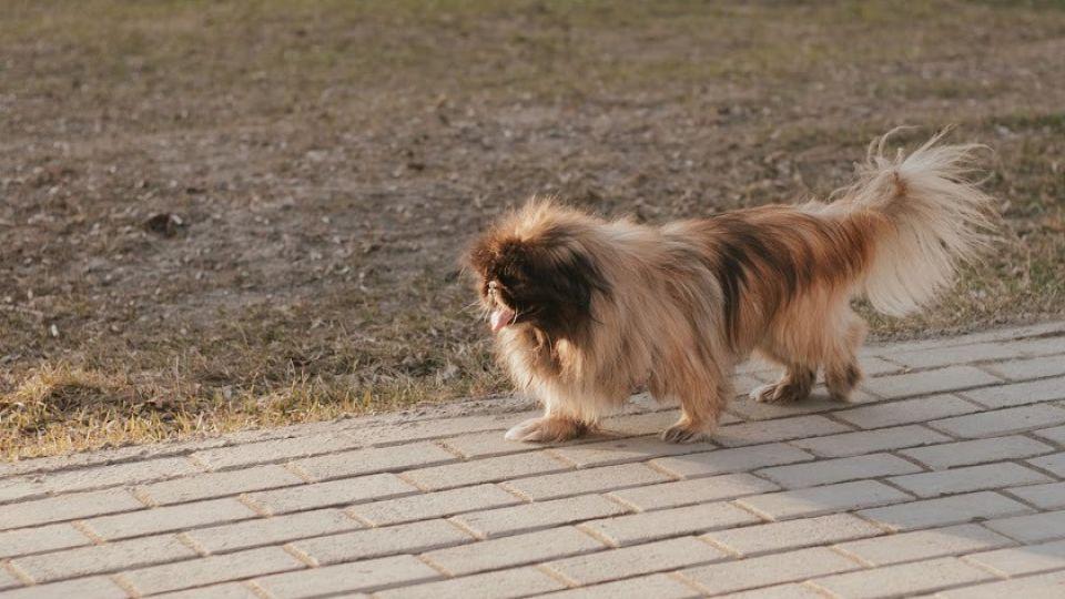 Собака. Весна