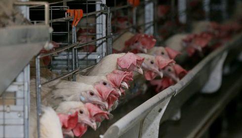 Производители объяснили рост цен на яйца в Алтайском крае на 70%