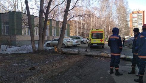 В мэрии Барнаула рассказали о падении дерева на мужчину