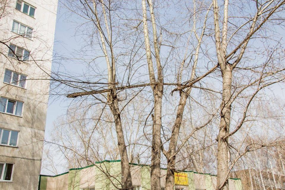 В Барнауле мужчина погиб от упавшего дерева