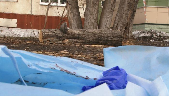 В Барнауле на прохожего упало дерево: мужчина скончался