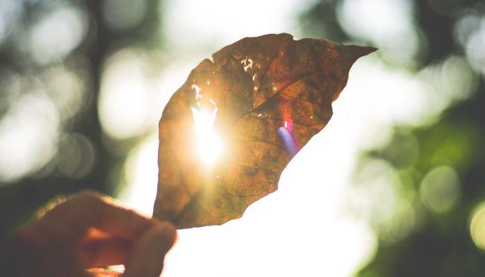 Невероятное весеннее тепло до +22 градусов прогнозируют синоптики на Алтае