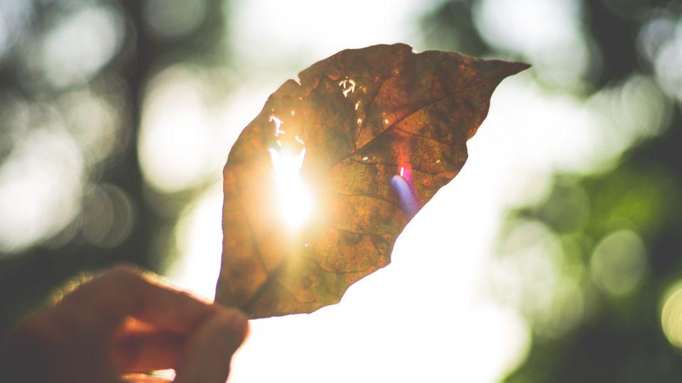 Солнце. Тепло