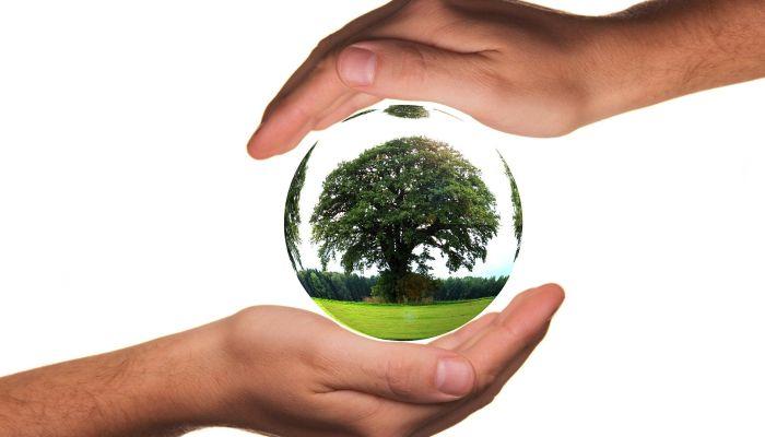 Зачем нужны Дни защиты от экологической опасности и когда они проходят