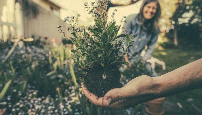Какие цветы можно высаживать в открытый грунт весной