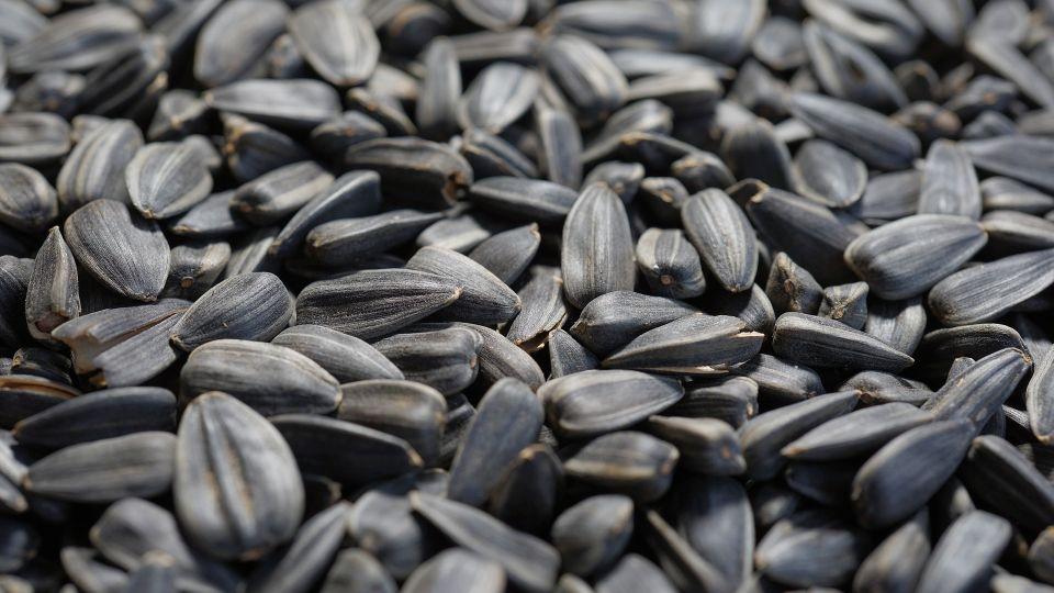 В Алтайском крае взлетели цены на масличные культуры