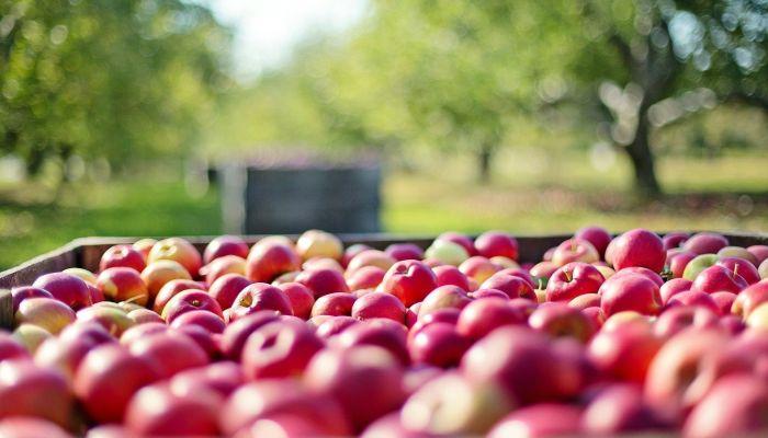 Эксперт перечислил хитрости сохранения урожая при неустойчивой погоде