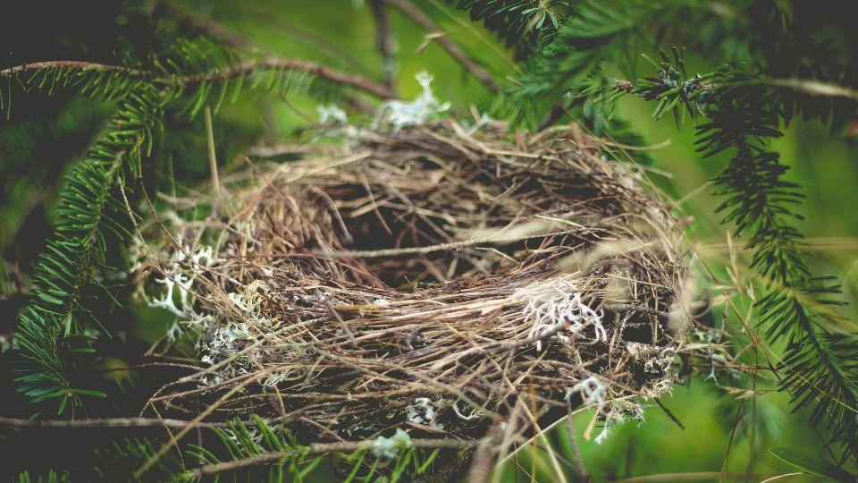 Гнездо. Природа. Птицы. Лес