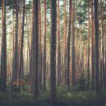 В барнаульском лесу хотят разморозить участок под многоэтажную застройку