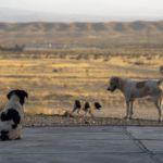 В Башкирии стая бродячих собак растерзала ребенка