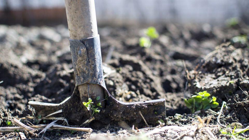 Огород. Лопата. Посадка