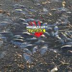 Массовый мор рыбы произошел на озере у Рубцовска