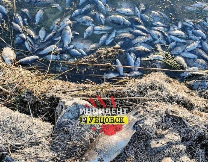 Рыба в озере Ракиты Фото:vk.com/incident_rubtsovsk