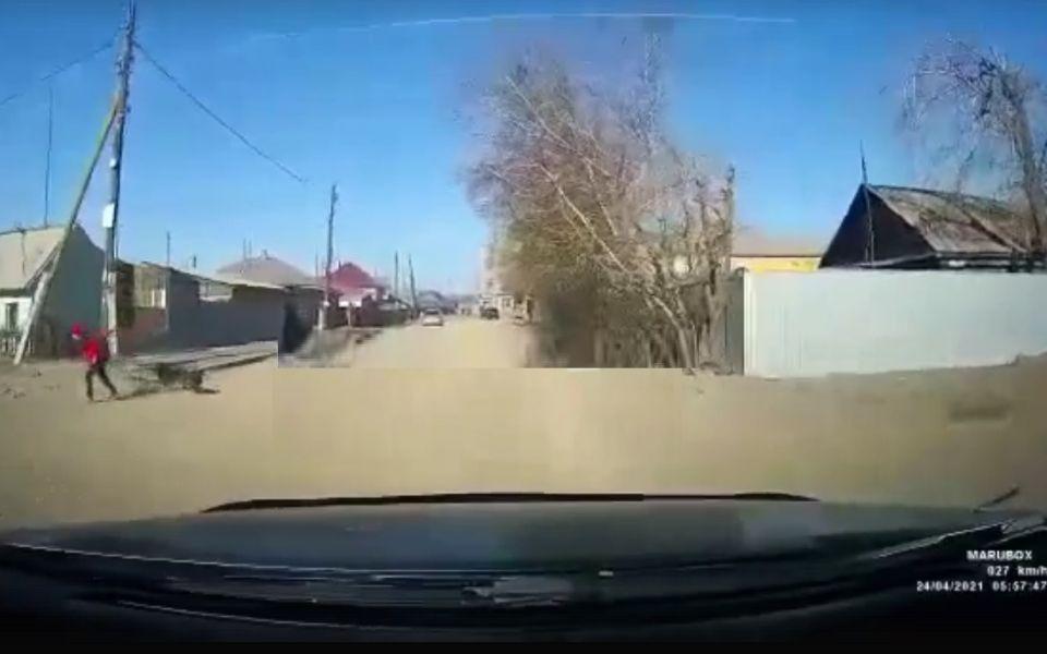 В Алтайском крае автомобилисты отбили ребенка от стаи собак