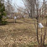 Меня скоро убьют: в роще Барнаула заговорили деревья