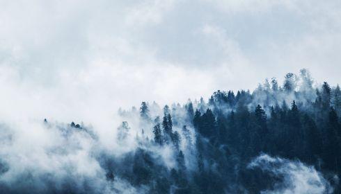 Шашлыков не будет: в Алтайском крае вводят особый противопожарный режим